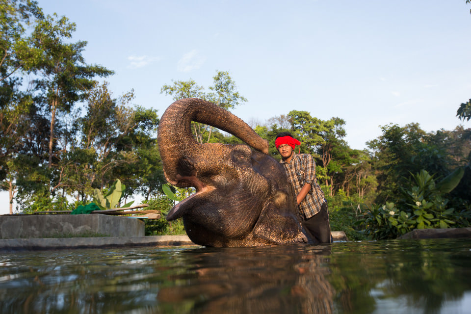 The-official-photographers-thailand-elephant-swim