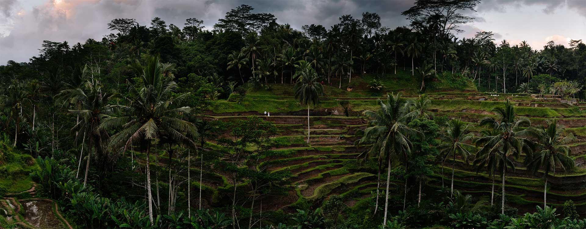 marc-megan-rice-field-panorama-bali2_Small